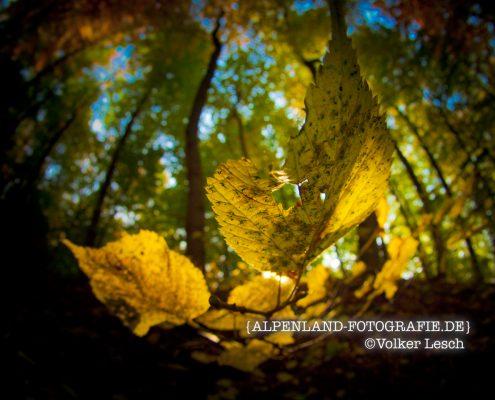 Blatt im Herbst © Volker Lesch