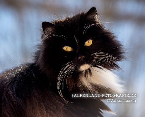 Katze © Volker Lesch