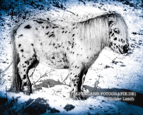 Pferde Taubenberg © Volker Lesch