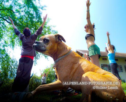 Yoga mit Mensch und Hund © Volker Lesch