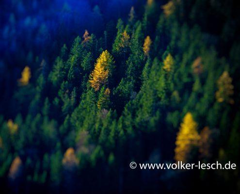 Zauberwald Hintersee Ramsau © Volker Lesch