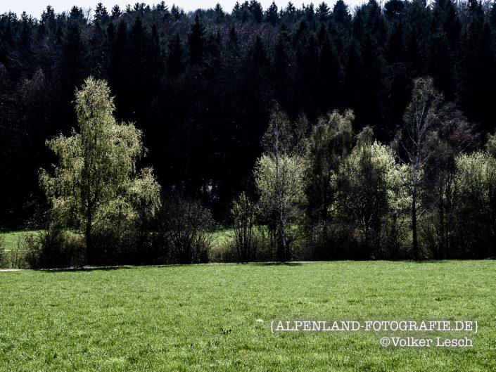 Seehamer See Frühling © Volker Lesch