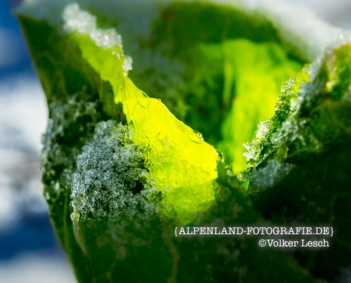 Winter Bad Reichenhall - Salat