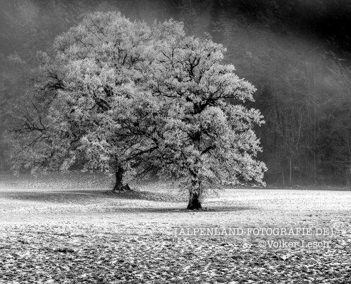 Am Tegernsee im Winter