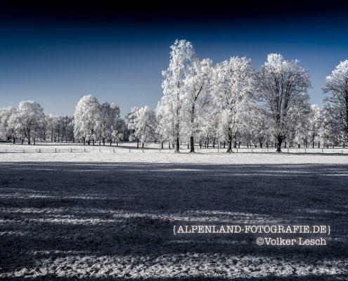 Bayerisches Oberland - Bäume im Winter
