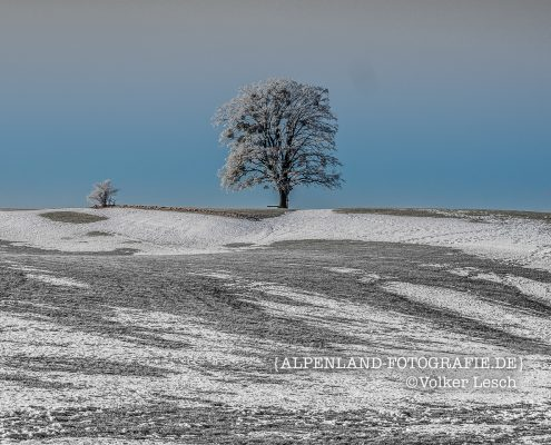 Warngau - Baum im Winter