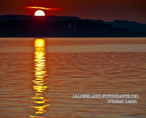 Foto der Woche - Sonnenuntergang am Chiemsee
