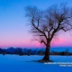 Das Bergener Moos im Winter © Volker Lesch - Alpenland Fotografie