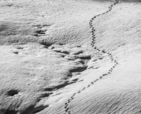 Spuren im Schnee © Volker Lesch - Alpenland Fotografie