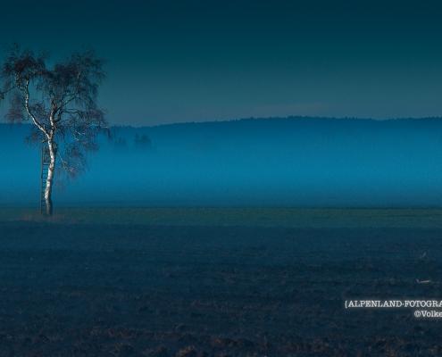 Baum an der Donau © Volker Lesch - Alpenland Fotografie