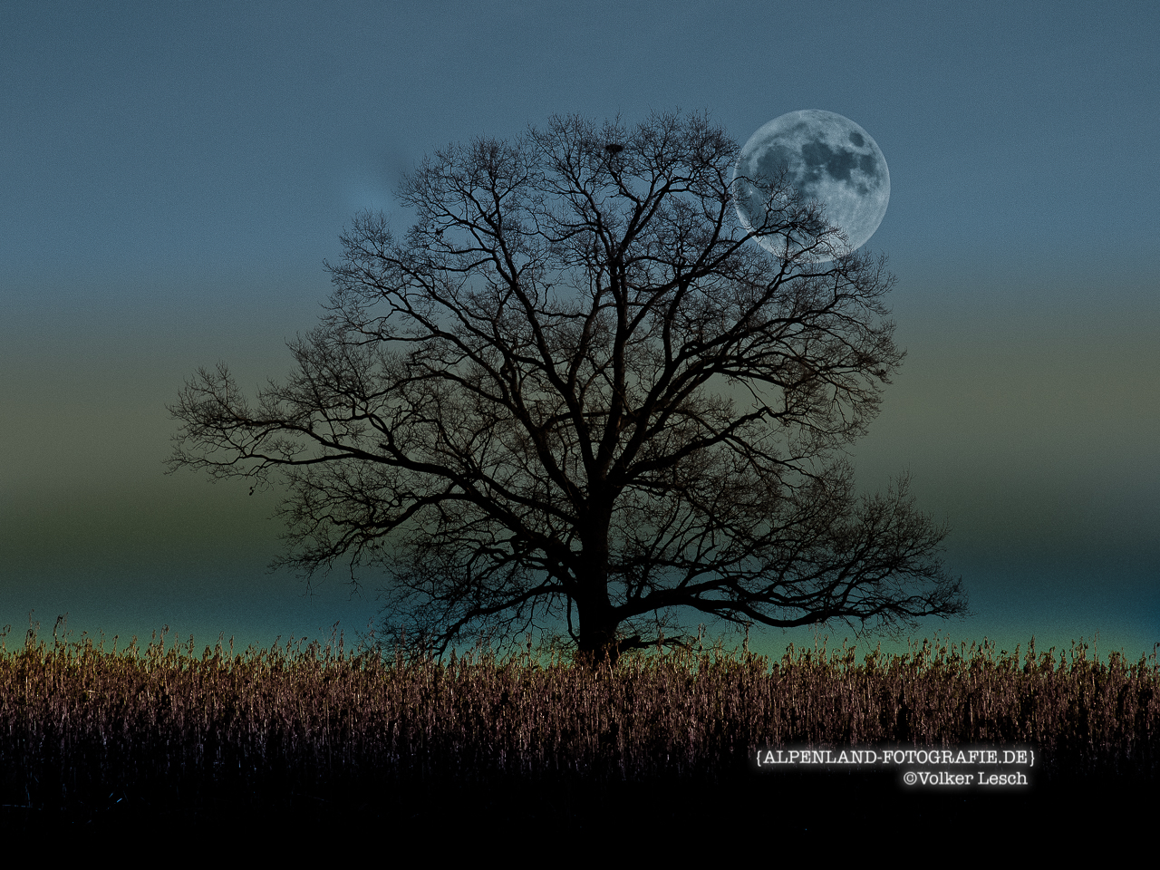 Vollmond im Ainringer Moor © Volker Lesch - Alpenland Fotografie
