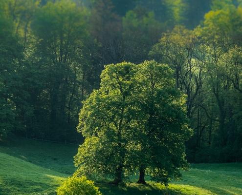 Bäume in Bad Reichenhall