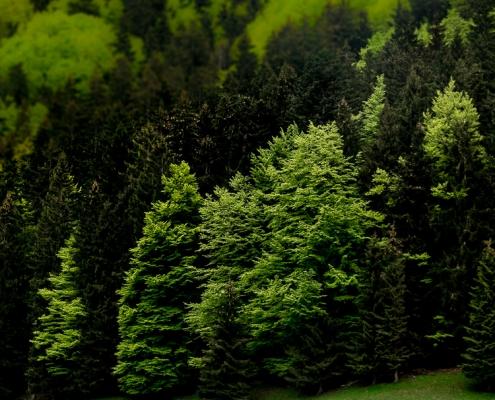 Bäume am Bauer in der Au Bad Wiessee