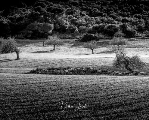 Mallorca Bäume