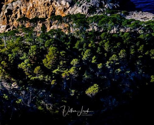 Mallorca Bäume Westküste