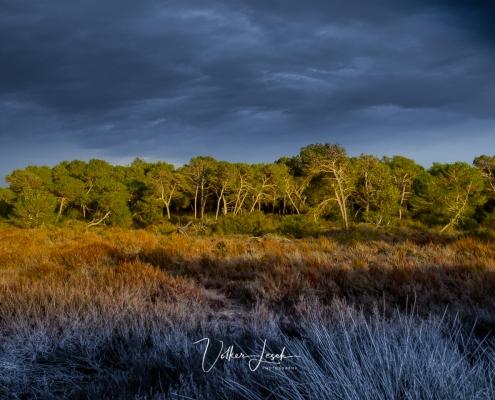 Mallorca Bäume Es Trenc