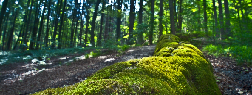 Geotope in Bayern - Steinerne Rinne Erasbach