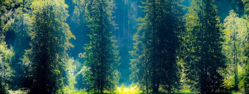 Frillensee bei Inzell im Sommer