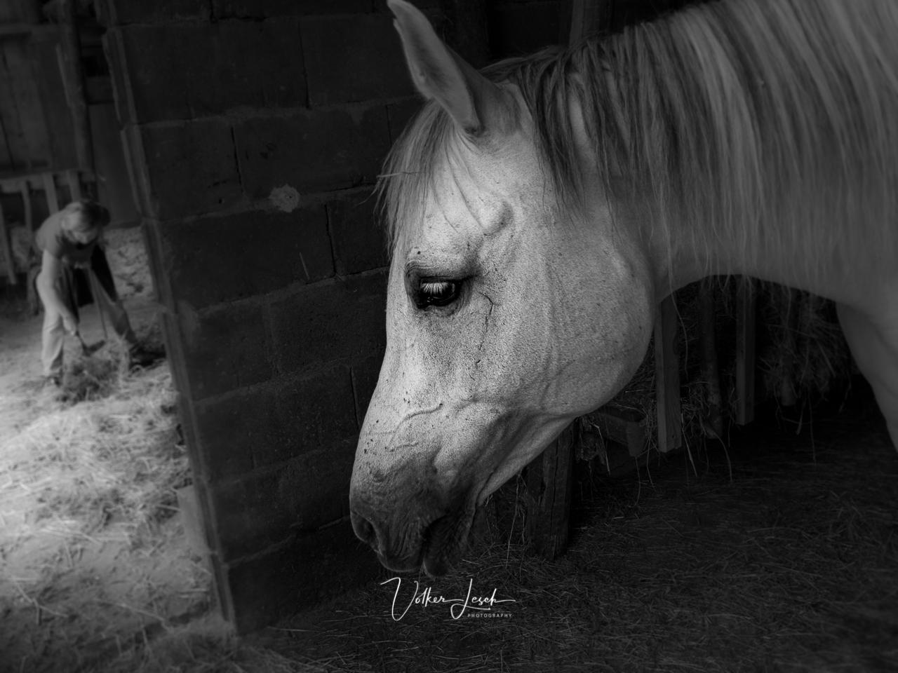 Pferde bei Natalie Frey in Kirchheim Unterfranken
