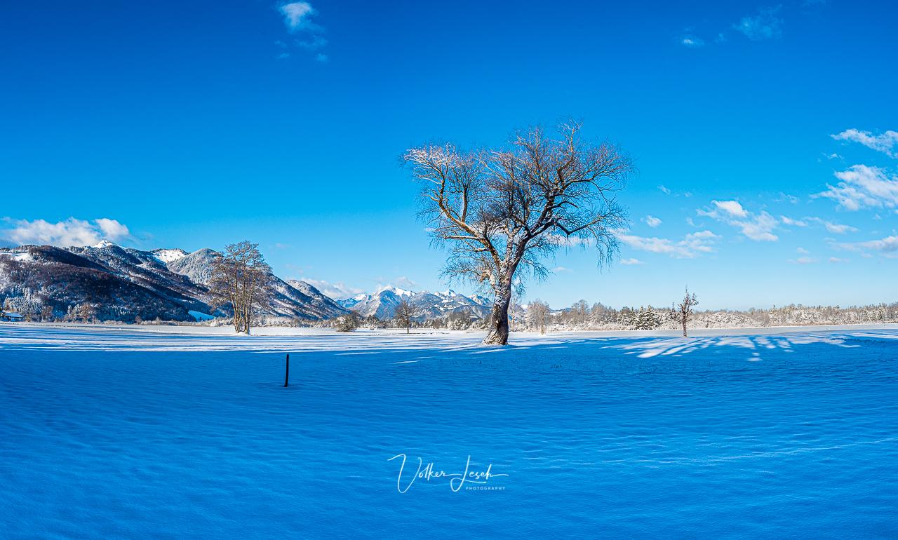 Bergener Moor Winter