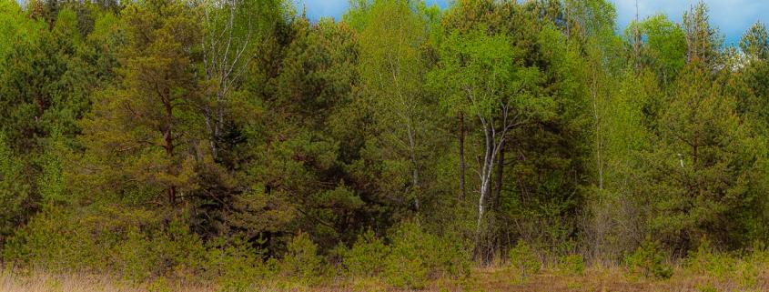 Moor bei Seeon am Chiemsee